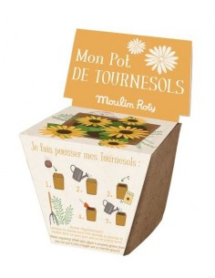 Pot de graines tournesol le...